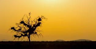 Lever de soleil et arbre de silhouette avec le héron Image libre de droits