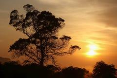 Lever de soleil et arbres Image libre de droits