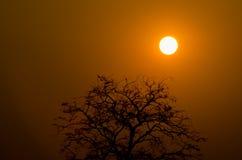 Lever de soleil et arbres avec l'ombre Photos stock