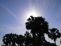 Lever de soleil et ciel lumineux pendant le matin derrière le palmier à sucre, Songkhla, Thaïlande Photo libre de droits