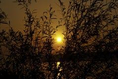 Lever de soleil et saule Images libres de droits