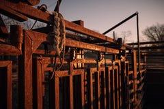 Lever de soleil givré de pousse de bétail Photos stock