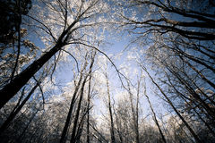 Lever de soleil glacial Photos libres de droits