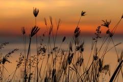 Lever de soleil herbeux de silhouette Photos libres de droits