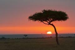 Lever de soleil Kenya de Mara de masai Photographie stock