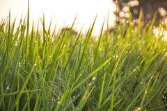 Lever de soleil léger Photographie stock libre de droits