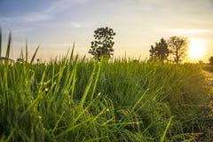 Lever de soleil léger Image libre de droits