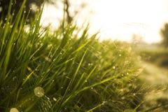 Lever de soleil léger Photos stock