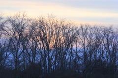Lever de soleil La banque gauche de la rivière de Tura Tyumen Russe Sibérie Image stock