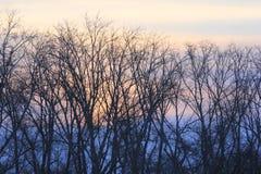 Lever de soleil La banque gauche de la rivière de Tura Tyumen Russe Sibérie Photo stock
