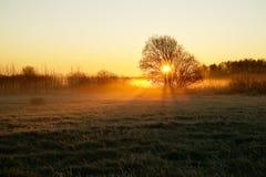 Lever de soleil lumineux au-dessus de champ Images libres de droits