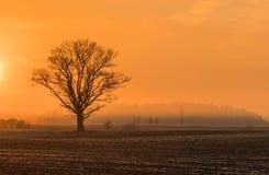 Lever de soleil magique avec l'arbre Image libre de droits