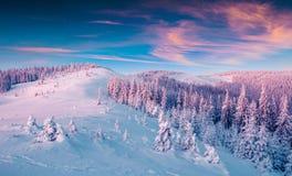 Lever de soleil magnifique d'hiver en montagnes carpathiennes avec le cov de neige images stock