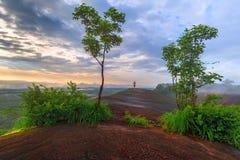 Lever de soleil de matin et brumeux de la roche d'arbre Photo libre de droits