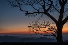 Lever de soleil de montagne avec l'arbre dans le premier plan Photographie stock