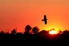 Lever de soleil orange photographie stock libre de droits
