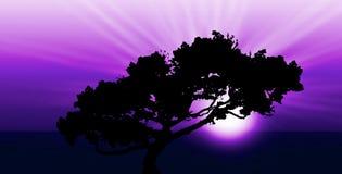 Lever de soleil ou coucher du soleil exotique Image stock