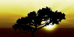 Lever de soleil ou coucher du soleil exotique Images libres de droits