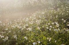 Lever de soleil paisible de pré Photographie stock
