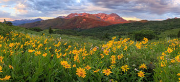 Lever de soleil panoramique avec les wildflowers colorés, Utah Photo libre de droits