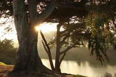 Lever de soleil par des arbres Images libres de droits