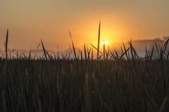 Lever de soleil par l'herbe de marais Image libre de droits