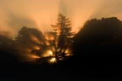 Lever de soleil par les arbres images stock