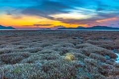 lever de soleil de paysage au-dessus du récif coralien Le récif coralien émerge de l'eau à un niveau d'eau réduit photos libres de droits