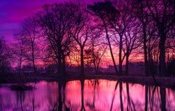 Lever de soleil reflété par les arbres nus d'hiver