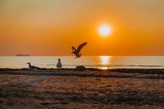 Lever de soleil renversant sur la mer Images libres de droits