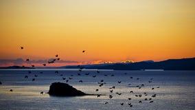 Lever de soleil romantique au-dessus du lac Baikal avec des oiseaux photographie stock