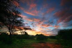 lever de soleil rosâtre Images stock