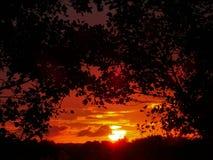 Lever de soleil rougeâtre voyant des arbres image libre de droits