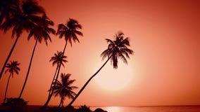Lever de soleil rouge de palmiers de nature Île jaune du soleil et de plage Course au paradis banque de vidéos