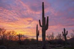 Lever de soleil de Saguaro image libre de droits