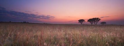 Lever de soleil sans nuages froid de matin avec les arbres, l'herbe brune et le brouillard Images stock