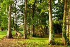 Lever de soleil sur des arbres Images stock