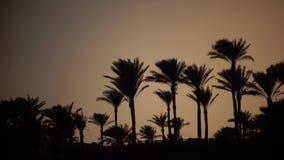 Lever de soleil sur la plage autour de l'océan et des palmiers banque de vidéos
