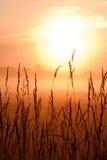 Lever de soleil sur la zone de blé Photo stock