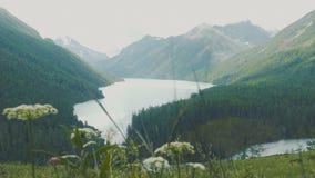 Lever de soleil sur le lac Kucherla avec vue sur la montagne de Belukha, République d'Altai, Russie banque de vidéos