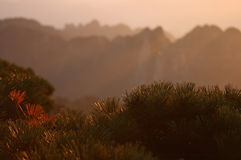 Lever de soleil sur le mt. Huangshan Images stock