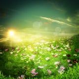 Lever de soleil sur le pré Image libre de droits