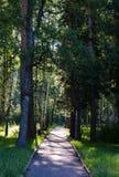 Lever de soleil sur le sentier piéton dans les bois Photo stock