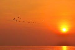 Lever de soleil sur le vol de mer et d'oiseau Photographie stock libre de droits