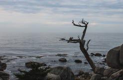 Lever de soleil sur Rocky Monterey Ca, photographie stock libre de droits