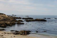 Lever de soleil sur Rocky Monterey Ca, image libre de droits
