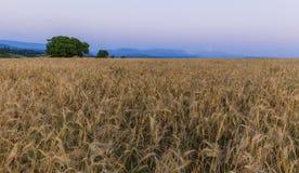Lever de soleil sur Shahdag et un champ de blé avec des pavots Photos stock