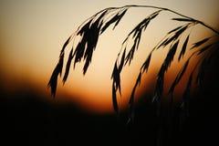 Lever de soleil sur un champ photographie stock