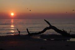 Lever de soleil sur une plage sauvage Photographie stock libre de droits