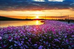 Lever de soleil traçant le cosmos Photographie stock libre de droits